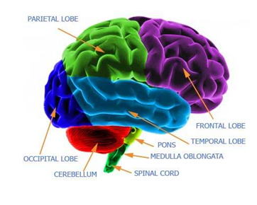 Use Your Brain to Help Depression – Restorative Health Solutions