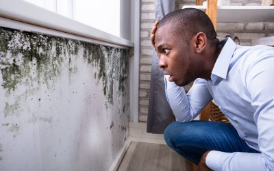 Mold and Lyme – A Poisonous Combo